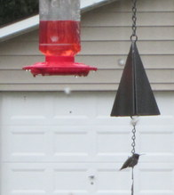 Give Hummingbirds a Place To Rest!
