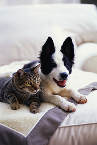 3 Ways to Keep Pets Healthy and Happy