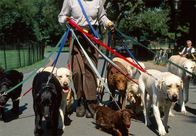 Musings From a Professional Dog Walker