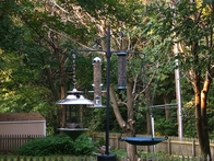 How to attract more birds to your yard