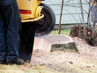 All the Reasons Why You Should Hire Professionals for Tree Stump Removal
