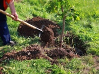 The Importance of Professional Tree Planting and Care Services