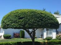 Professional Tree Shaping and Pruning – Maintain a Year-Round Yard Aesthetics