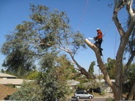 COMMON MISTAKES TO AVOID WHEN REMOVING A TREE