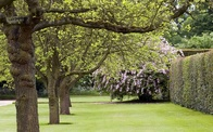 Signs That Indicate It Is Time to Say Goodbye to the Tree in Your Yard