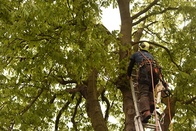 Removing a tree from your garden: the purpose of tree safety services