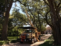 Leave the Difficult Work of Tree Removal to Tree Services Experts