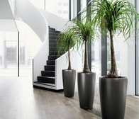 Best Indoor Plants to Make Your Home More Inviting and Improve Air Quality