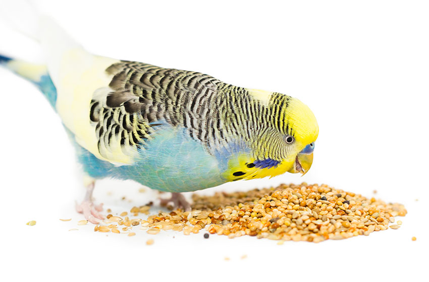 A superb range of pet bird health products