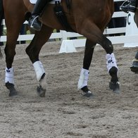 Horse exercise boots