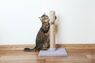 Cats Scratch Post