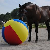 Toys for Horse