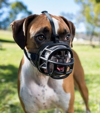 Benefits of Dog Muzzles