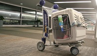 Dog Cages For Easy Travelling