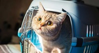 Cat Carrier Cages